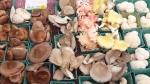 display shii, oyste, LM
